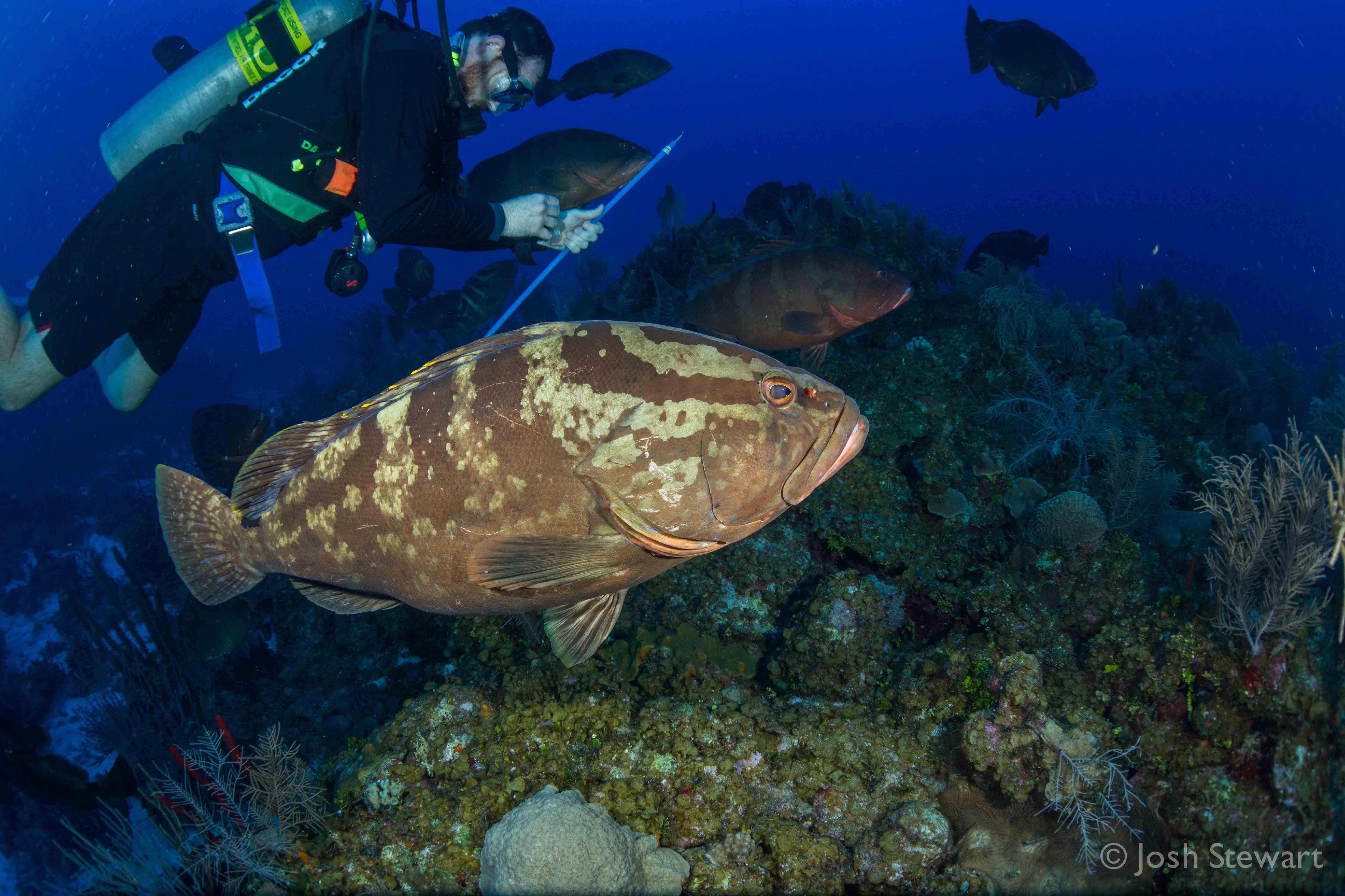 grouper project Reef grouper moon project - google+ press question mark to see available shortcut keys.