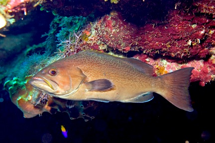 Roatan Field Survey a Success! | Reef Environmental ...