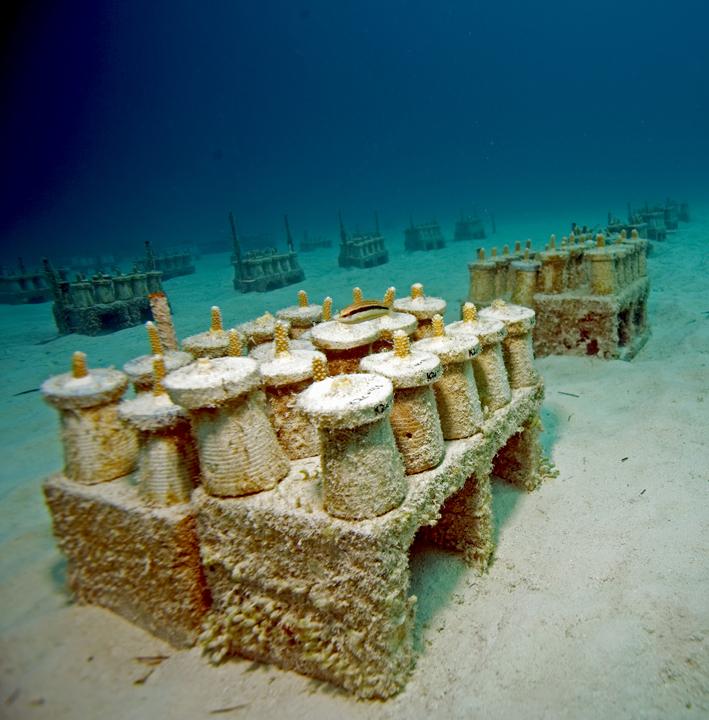 Perdido Key Florida Map: Believe It Or Not -- REEF Volunteers Grow A Coral Reef