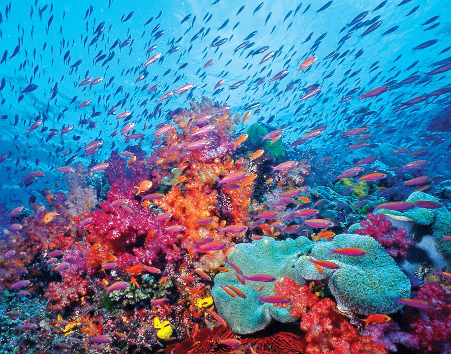 REEF-in-Brief November/December 2009 | Reef Environmental ...