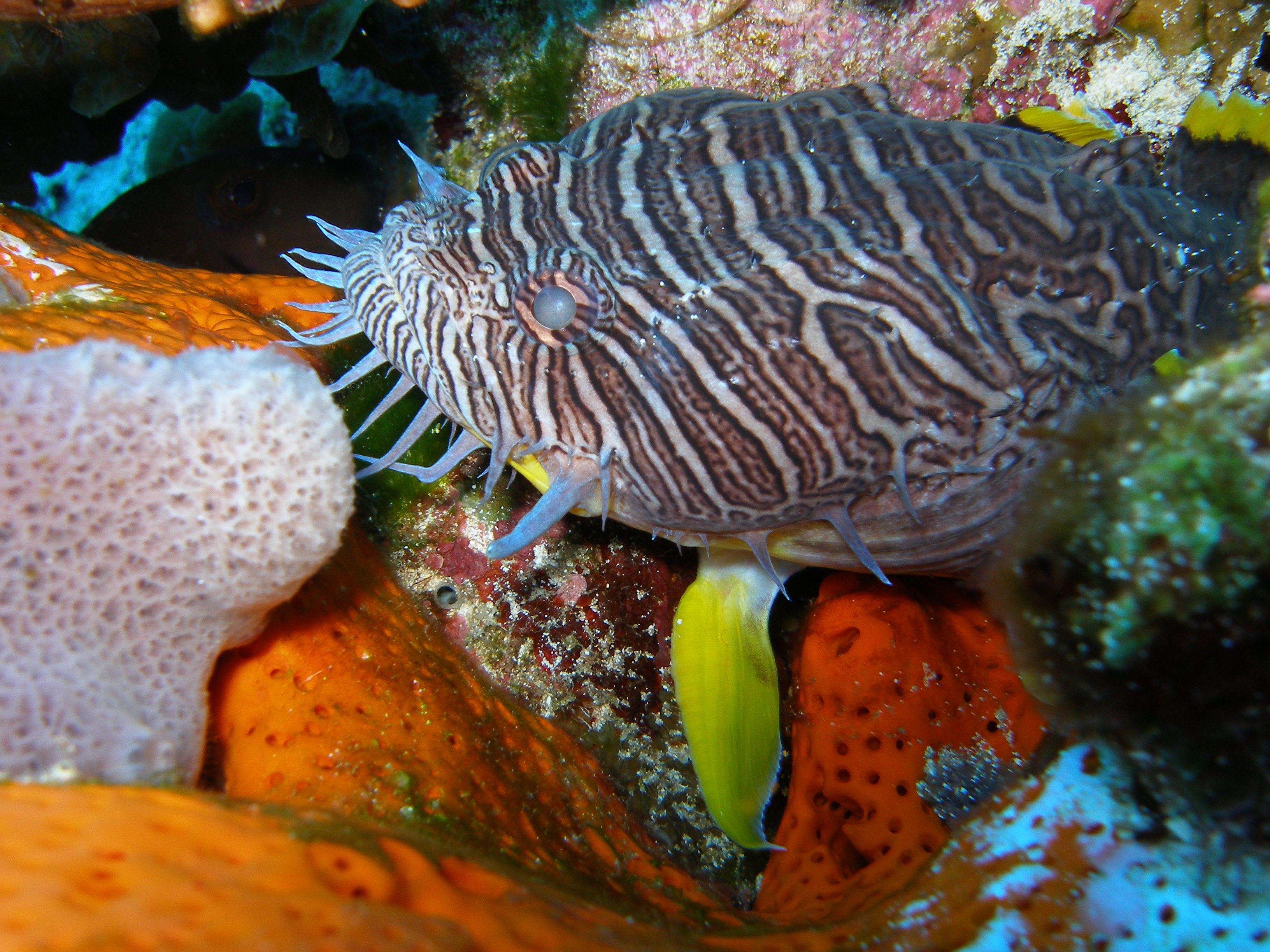 Travel trips and tips october reef environmental for Caribbean reef fish