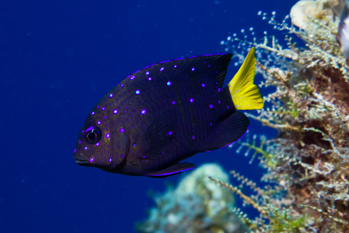 The Faces of REEF: Member Spotlight, Douglas and Jane ...