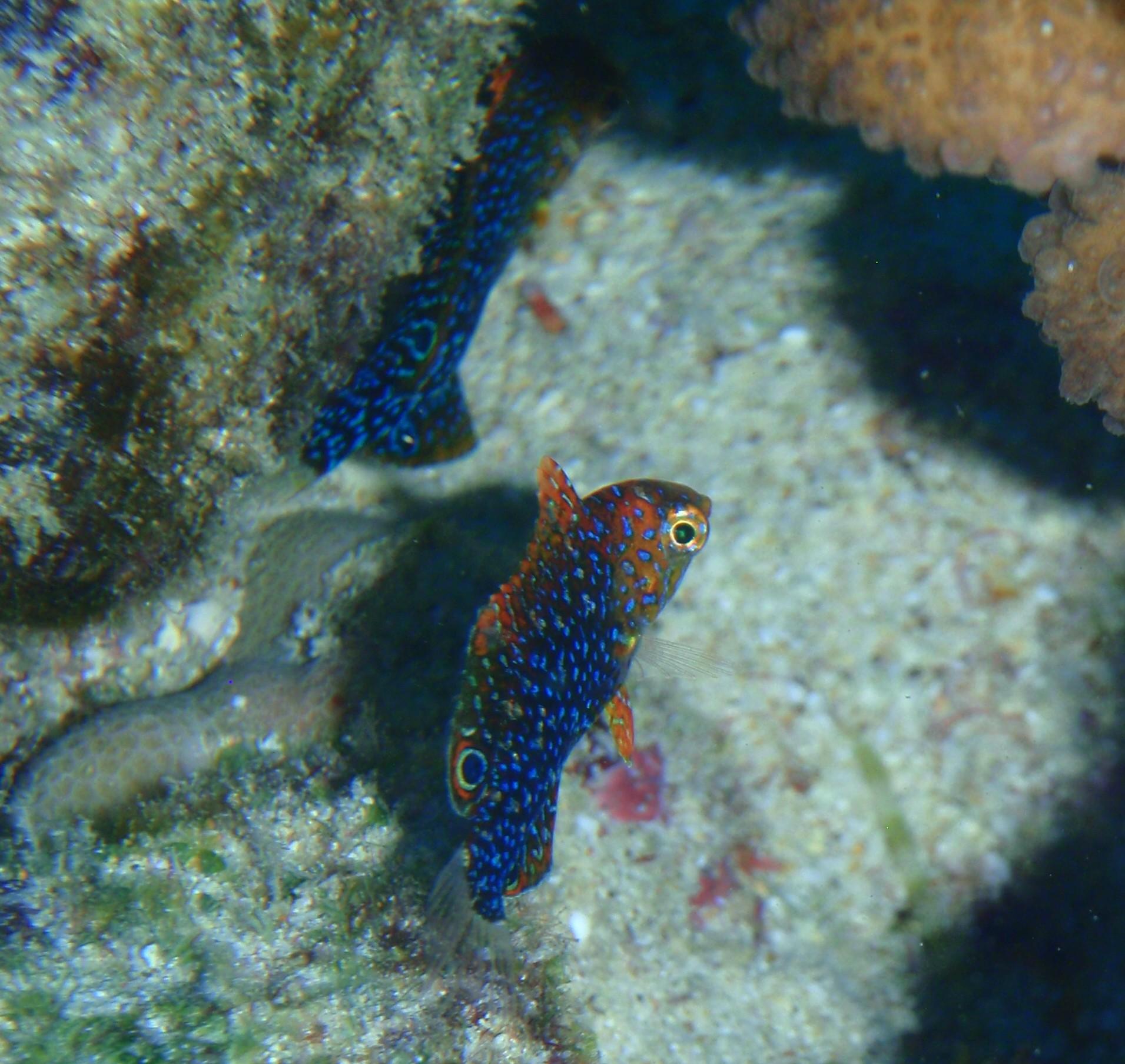 hawaii fish help