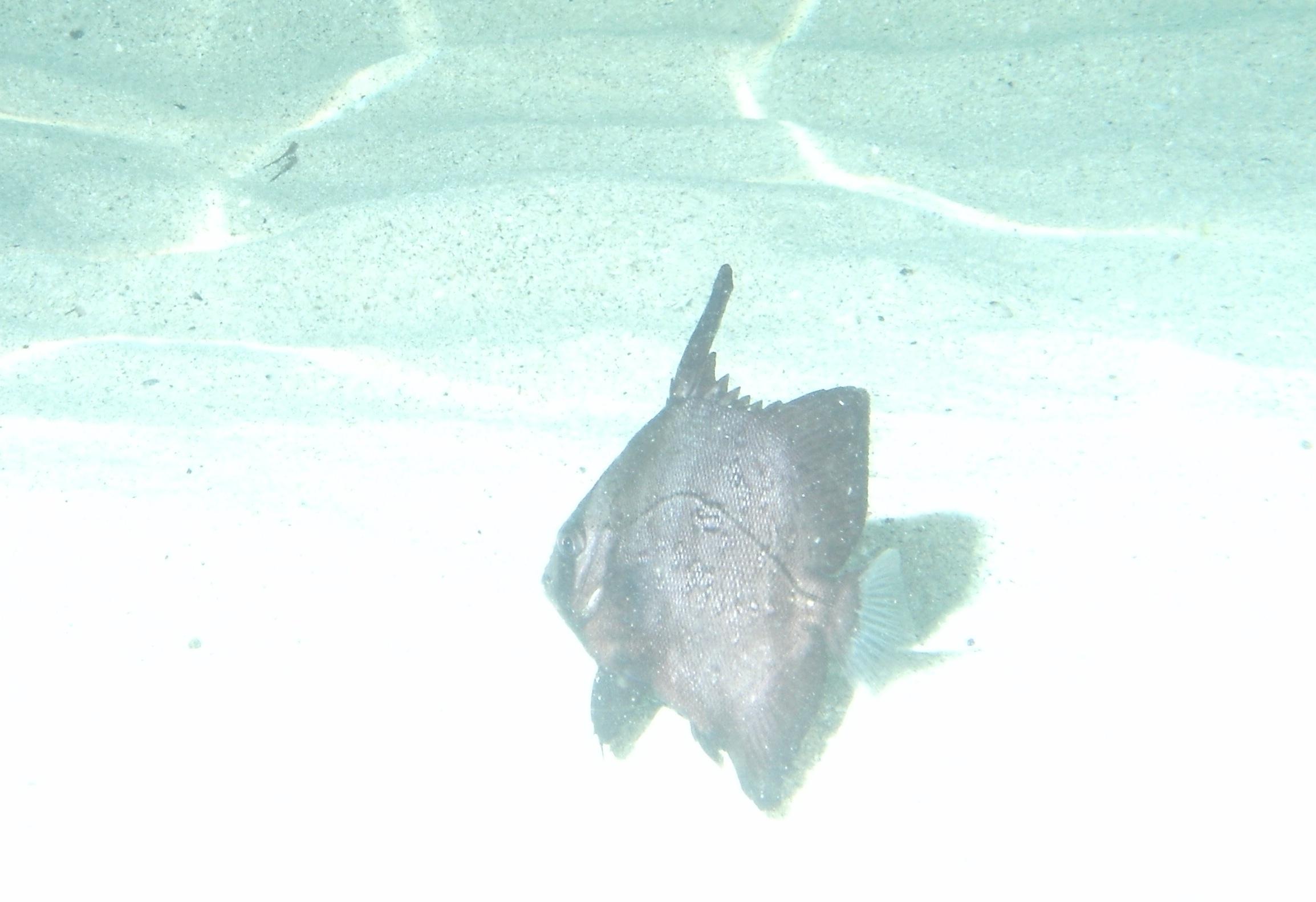 Jupiter Inlet Florida Unknow Fish Reef Environmental