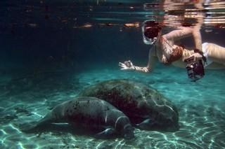 marine life jamaica