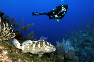 REEF Grouper Moon Volunteer, Brenda Hitt, surveys the Little Cayman Nassau grouper aggregation site.: Photo by Phil Bush.