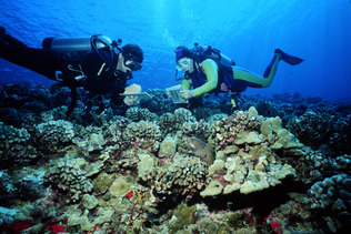 REEF Monitoring Project