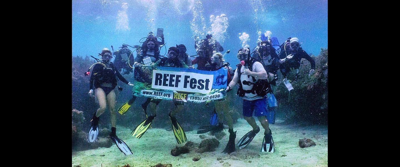 Reef Fest 2019