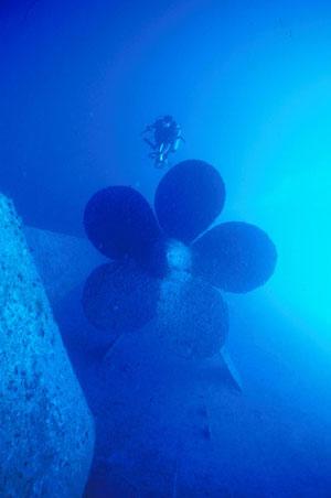 One of REEF's volunteer surveyors swimming over the prop.  Photo by Laddie Akins, REEF.