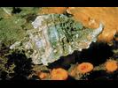 Leafy Hornmouth - Mollusks<br>(<i>Ceratostoma foliatum</i>)