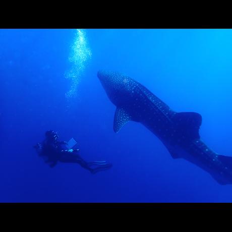 Chuck and a Whale Shark