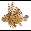 Host a Lionfish Derby or Workshop